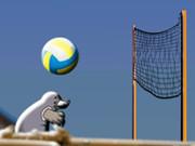 Mole Volleyball