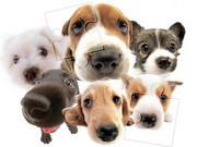 Cute Dog Jigsaw
