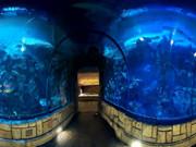 Escape From Sea Aquarium