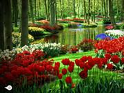 Valentine Garden Escape